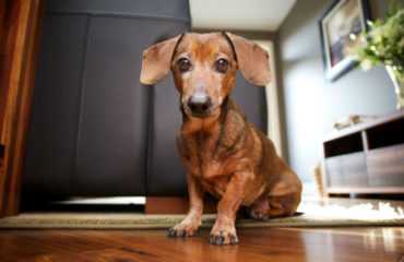 Myer Carpet Cleaning - help-my-friends-say-my-house-smells-like-a-dog