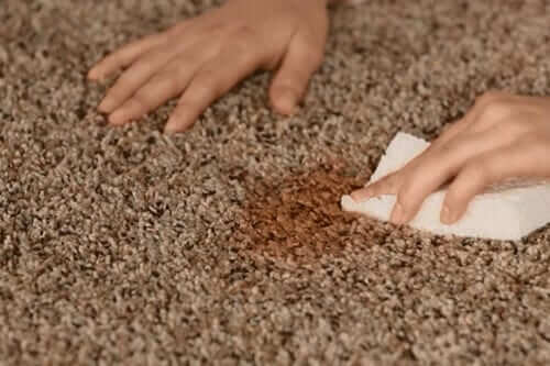 Myer Carpet Cleaning in Camberwell. Protect Your Carpet. Professional and Reliable Steam Cleaning Services in Melbourne, Sydney, Brisbane, Perth Australia
