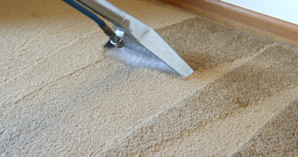 Carpet Water Stains. Professional Rug Cleaning. Servicing Melbourne, Sydney, Brisbane, Perth Australia