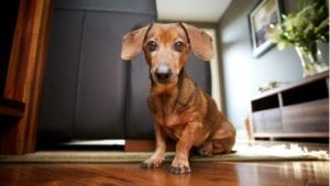 steam cleaning best for homes with dogs