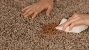Removing Brown Carpet Stains. Professional Steam Carpet Cleaning in Melbourne, Sydney, Brisbane, Perth Australia